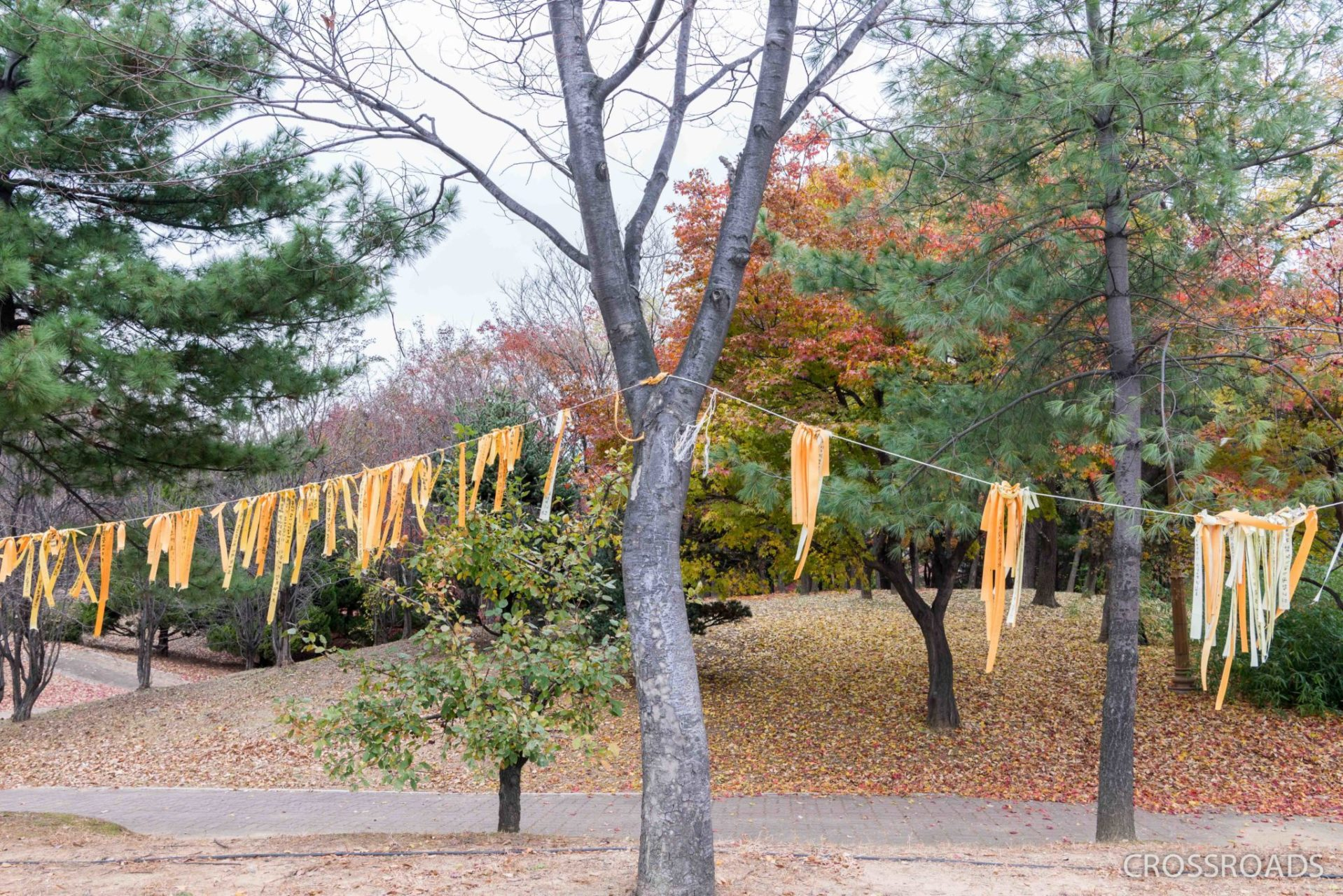 Remembrance ribbons are tried to trees near the Memorial Hall. The hall was dismantled after a memorial service on the 4th anniversary of the Sewol's sinking.