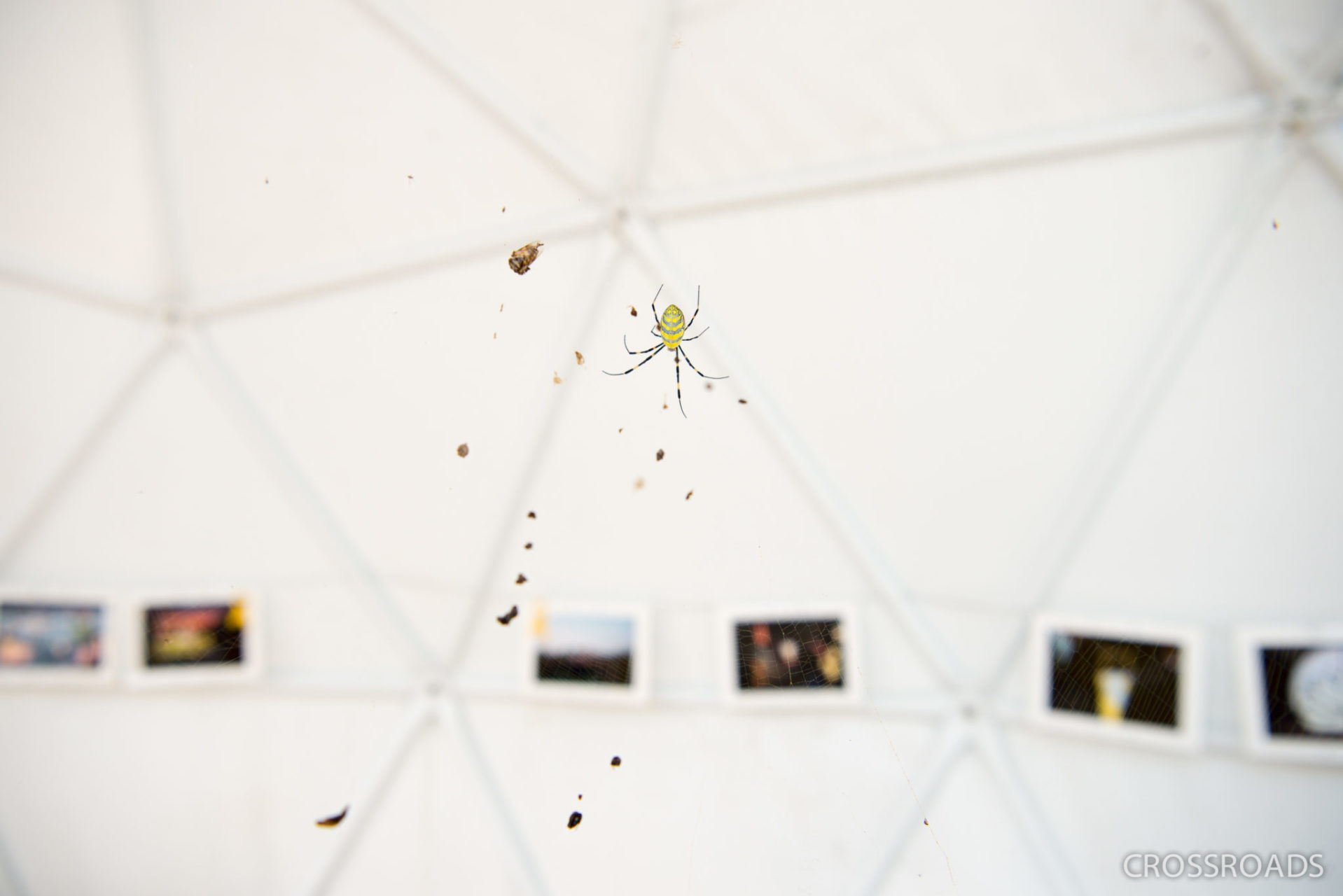 A yellow spider weaves her web in one of the three tents set up by Sewol parents, with photographs of the Sewol aftermath lining the tent's wall behind it. With the lookout now abandoned, nature is slowly taking is over. Strangely enough, much in the place is yellow – the colour of the Sewol remembrance ribbon –: this one spider and others, as well as flowers growing nearby.